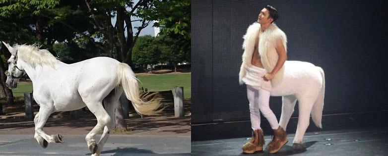 choi siwon look alike horse