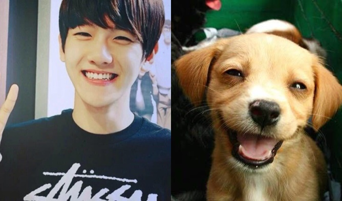kpop puppies, kpop puppy faces, kpop idols, kpop idols who look like puppies, kpop idol puppies, kpop idol puppy faces, kpop idols look like puppies, onew puppy, baro puppy, baekhyun puppy, bobby puppy, cha eunwoo puppy, yonghoon puppy, hyuk puppy