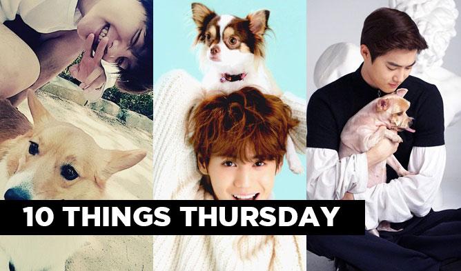 kpop puppy, kpop pets, kpop dogs, kpop idol pets, jonghyun byulroo