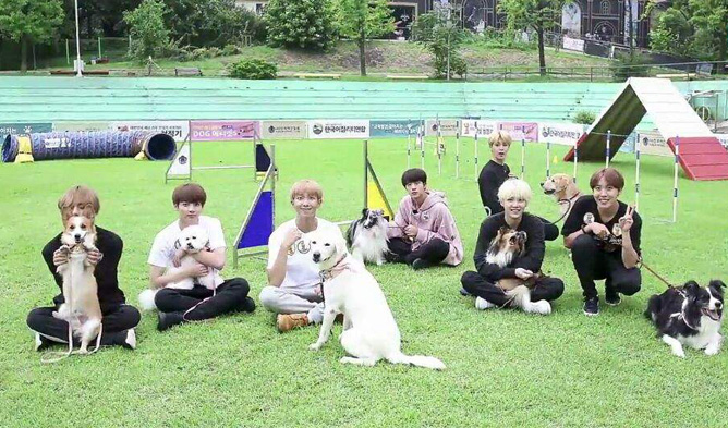 bts pet, bts, bts pet run, bts run, bts animals, bts profile, bts facts, bts members