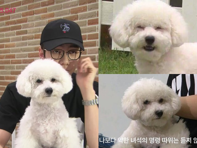 EXO's SeHun Wished A Happy Birthday To His Dog In A Cute Way