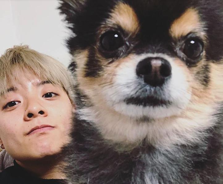 kpop idol dog