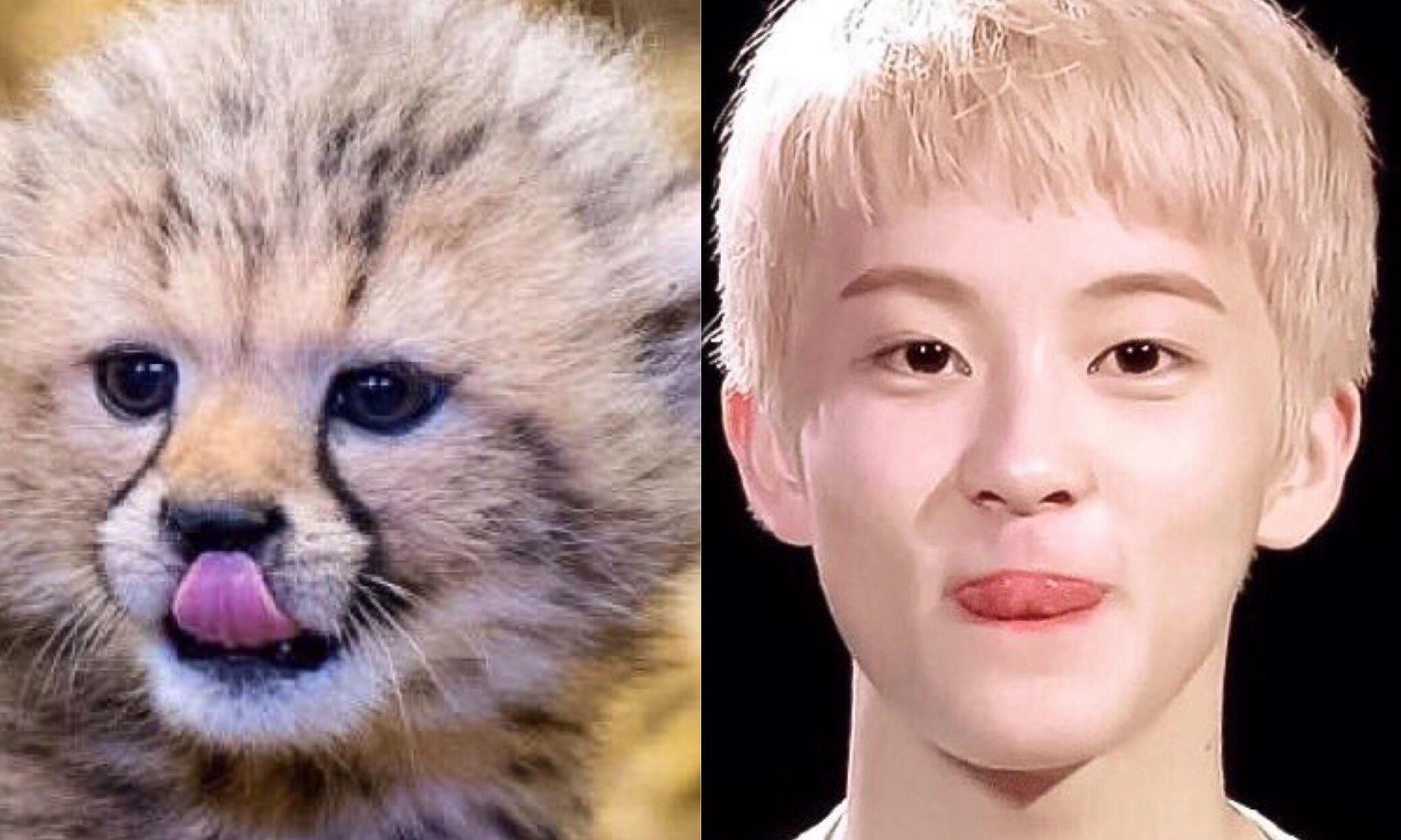 Baby Leopard Plushie That Reminds NCTzens Of NCT's Mark Trends Online