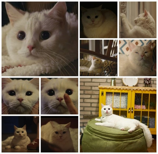 """Korean Viewers Are Curious About The Cat Of """"Meow, The Secret Boy"""", Find Out About BaeKi"""