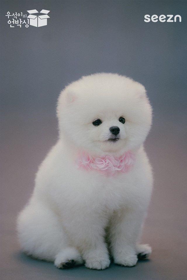 Fans Are Falling In Love With Kim WooSeok's Pet Dog, Dda Dda