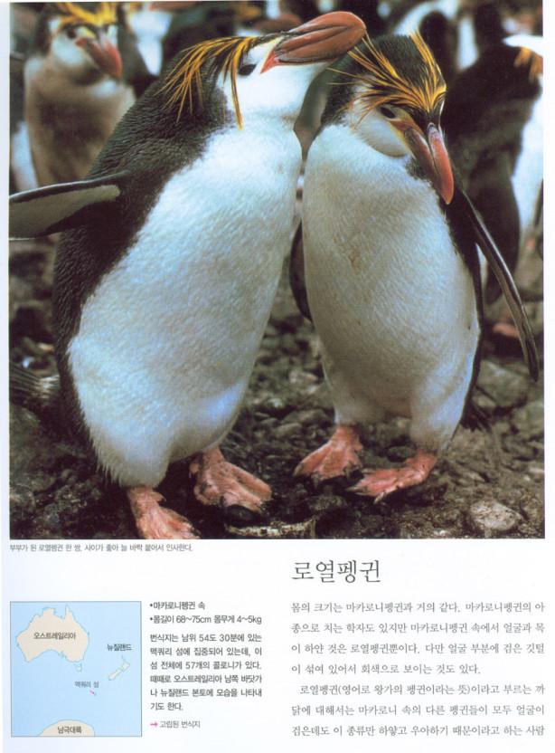 Пользователи сети Сравнить BLACKPINK Дженни Пингвин по этой причине