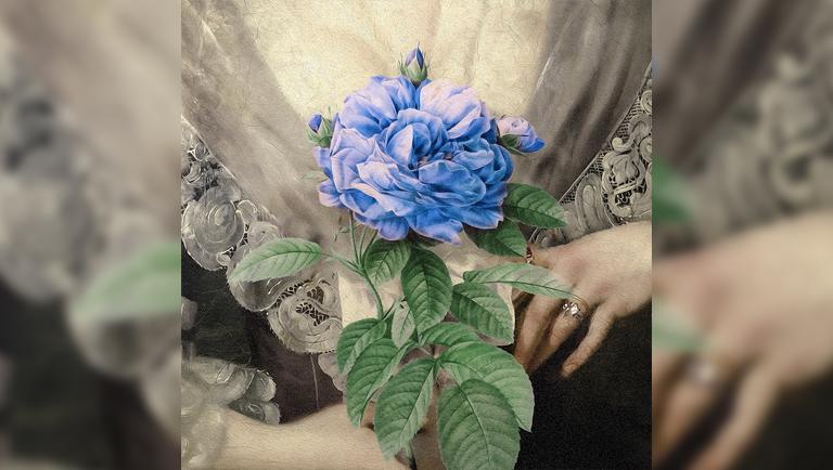 Album - Single Album<br> Title - 'Blue Rose'